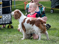 Waikato & District Spaniel Club